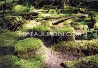 Moss Seat Tea Party, Haida Gwaii, BC