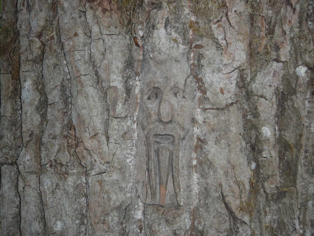 Carvings in Cottonwood trees, Ferry Island, BC