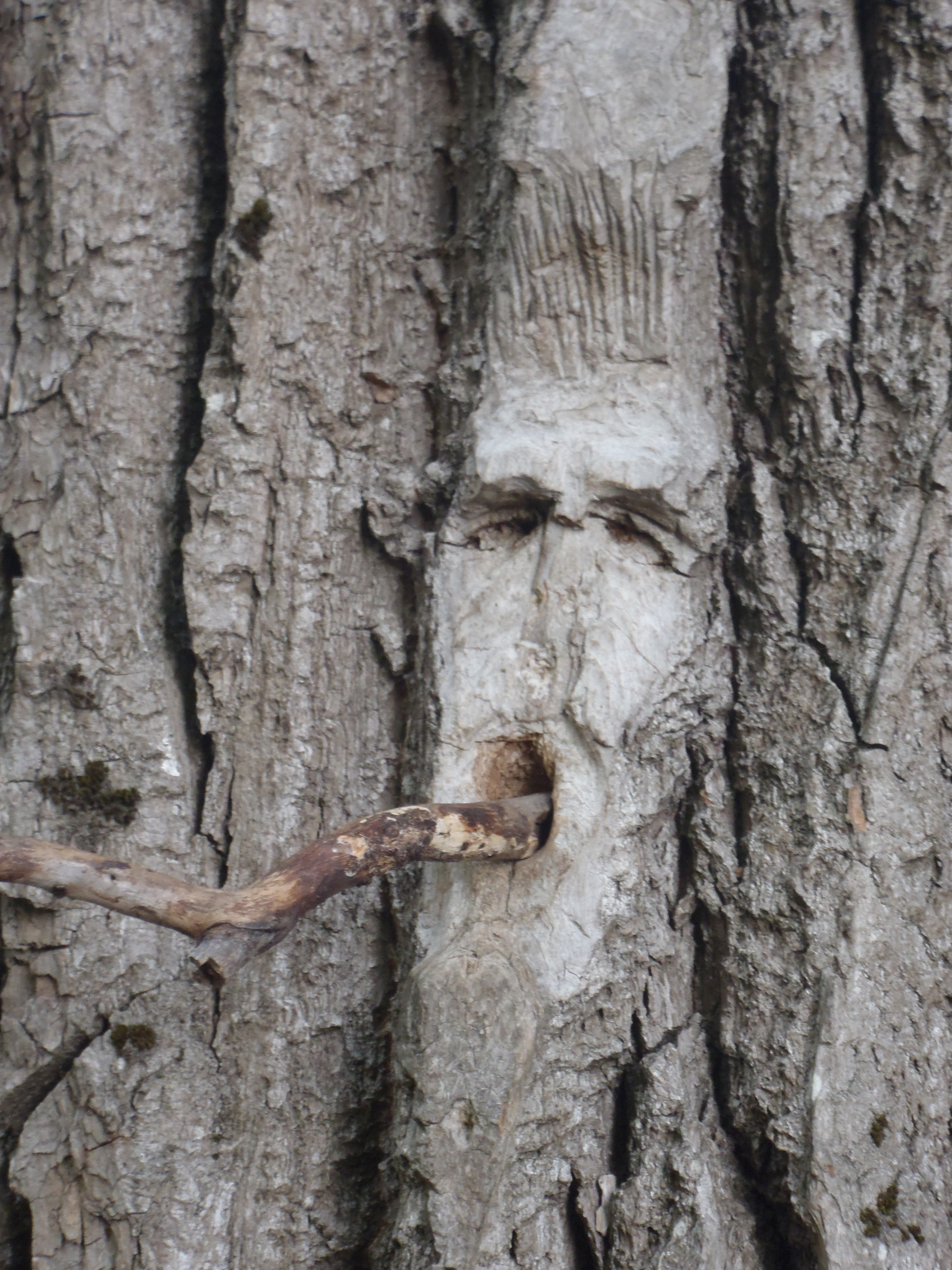 Carvings in cottonwood trees, Ferry Island, Terrace, BC